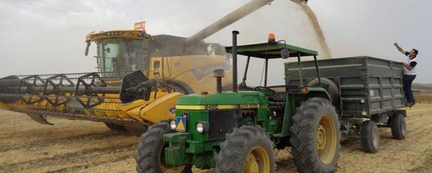 Los precios de los cereales tocan techo con la cebada a la baja