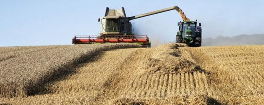 Caida generalizada de los precios de los cereales a excepción del trigo duro