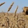 Nueva bajada de precios de los cereales para final de año