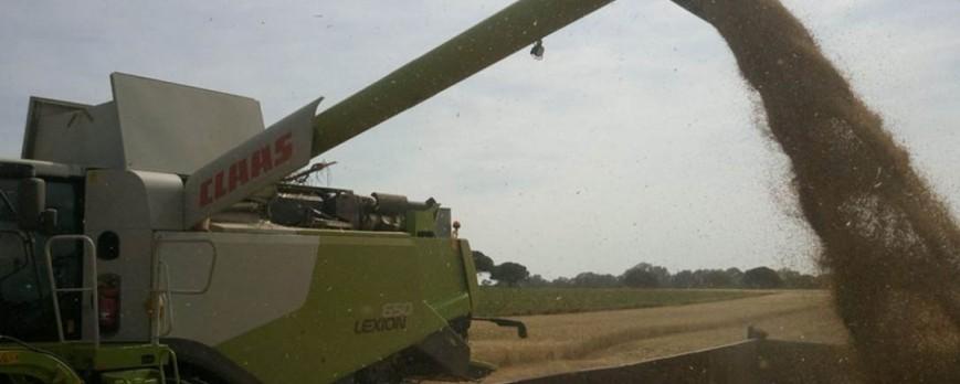 Balance del año: La agricultura aumenta posiciones y la ganadería se estanca