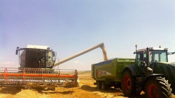 Los precios de los cereales se estancan en Enero de principios de año