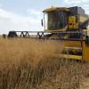 Incremento de los precios de los cereales muy moderados con el trigo al alza