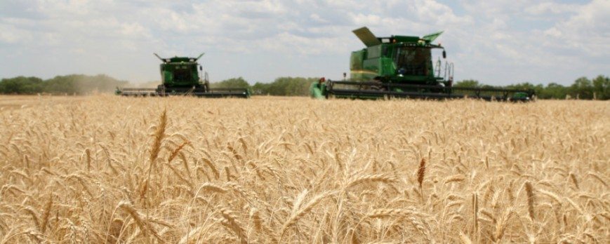 El informe USDA corrige el precio del trigo y deja dudas sobre su cotización