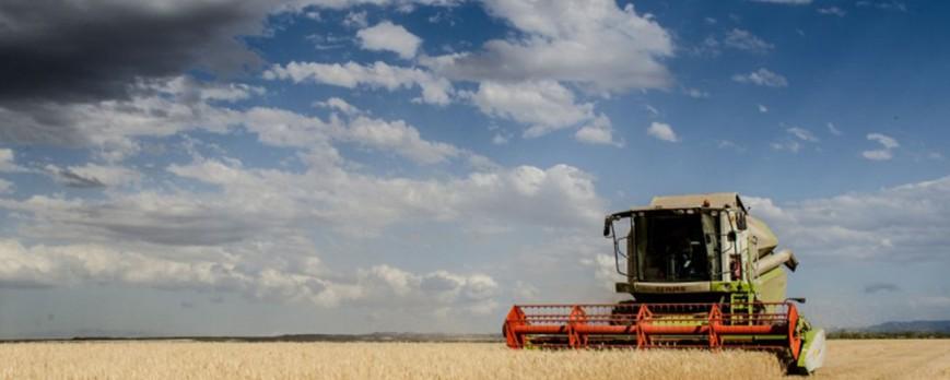 La cebada y el trigo encabezan la subida de precios de los cereales esta semana