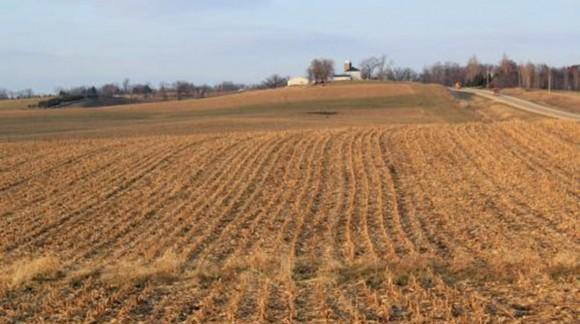 Preocupación en el sector del cereal por la previsión de primavera seca