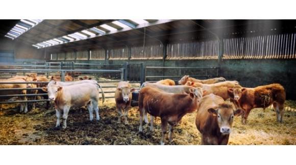 Agricultores y ganaderos españoles han percibido ya 4.303 millones del Feaga