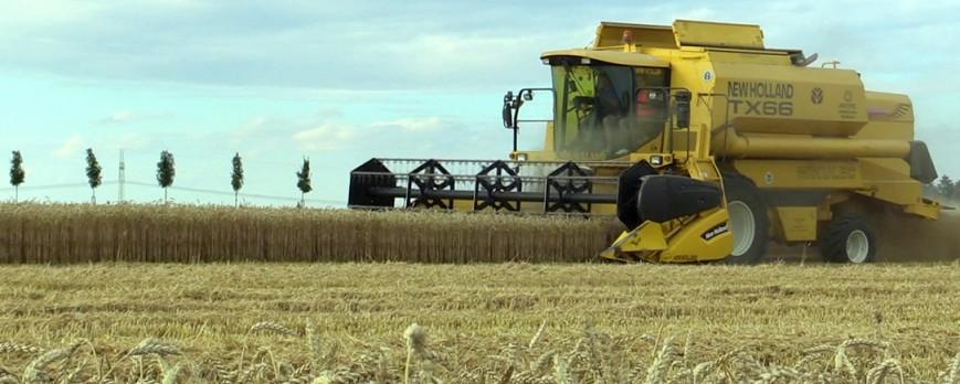 De nuevo subidas generalizadas en los precios de los cereales en los mercados mayoristas