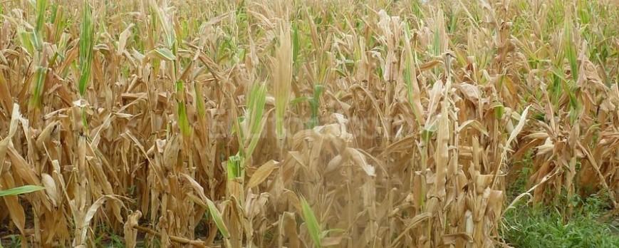 Pronostican un verano de sequía que beneficiará a la agricultura española