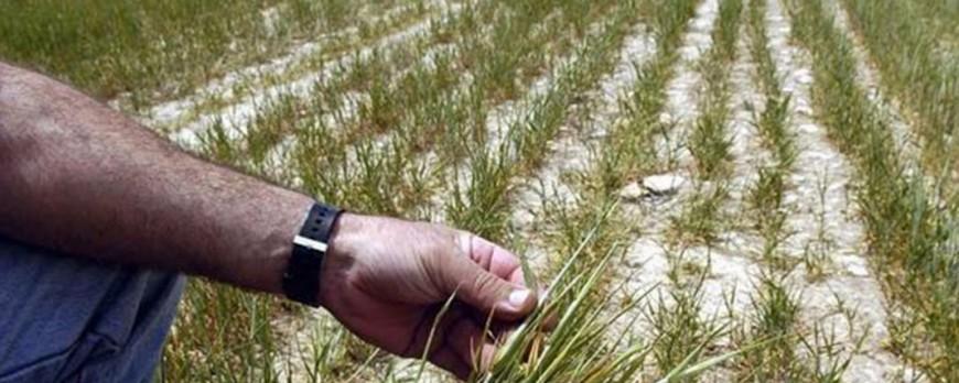 Queda un mes de plazo para solicitar las ayudas contra la sequía