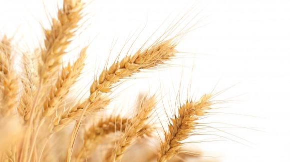 Continúa el descenso de los precios mayoristas de los cereales