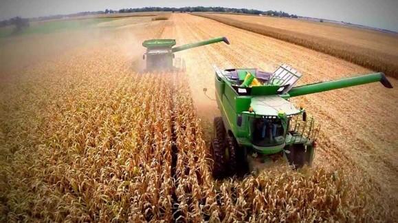 El precio del maíz sube algo esta semana, aunque el resto de cereales no ha variado su tendencia negativa
