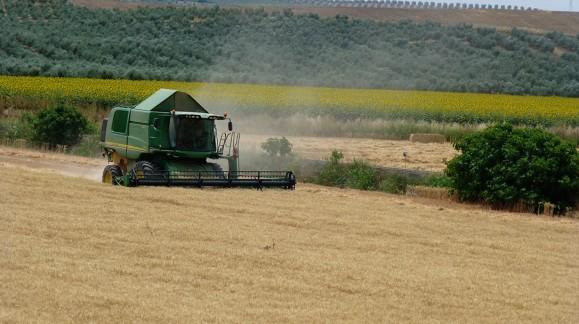 Se prevé un recorte del 37% en la cosecha de cereales de invierno en España