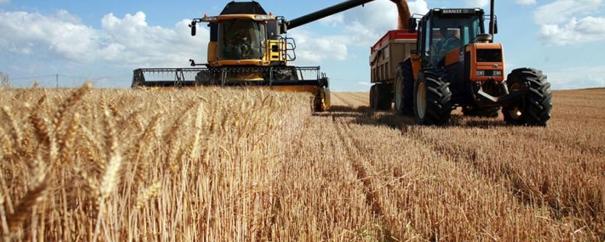 El precio del trigo duro es el único que sube esta semana, con descensos acusados del trigo blando, cebada y maíz