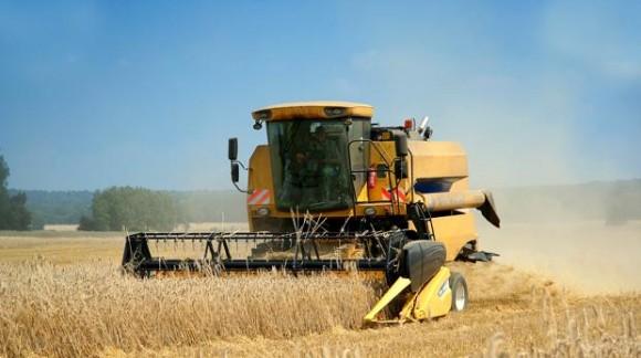 El trigo blando, cebada y maíz recuperan su cotización y precios al alza