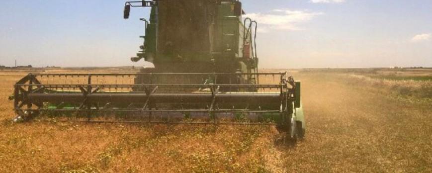 El precio del trigo duro sube levemente y el resto de cereales se mantienen igual