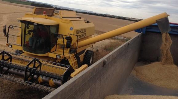 El trigo duro sube 2,17 euros, el resto de cereales mantiene los mismos precios