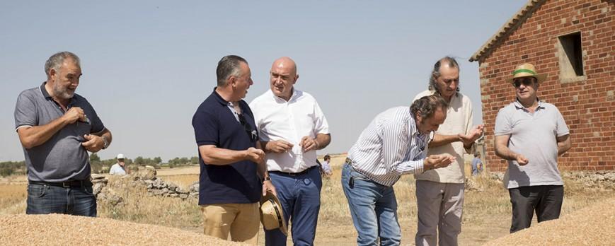 La cosecha de cereal en Castilla y León se reduce un 17%