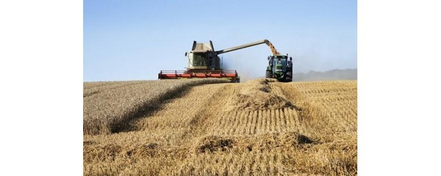 Nueva subida de precios del trigo duro, en contraste con el blando