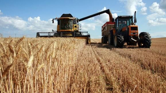 Continúa la bajada del precio del trigo blando y se frena la subida del duro