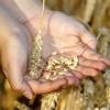 Los precios de los cereales están actualmente en caída libre