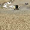 Se termina la campaña de cereal de invierno en León con bajadas como en todo el año