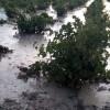 El seguro agrario cubre los daños causados por las tormentas de las últimas horas