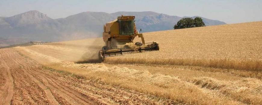 Agroseguro ha abonado más del 95% para cereales de invierno con 91,31 millones de euros