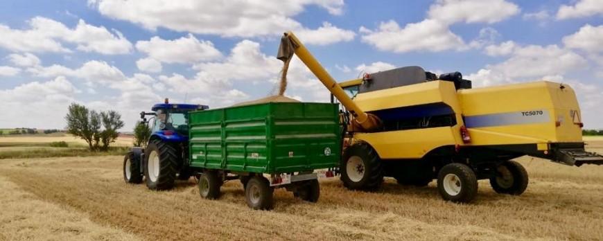 Los precios de los cereales con subidas esta semana, incluso el Maíz sube también