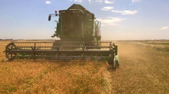 El precio del trigo iguala el mejor precio de la campaña pasada de 181 euros