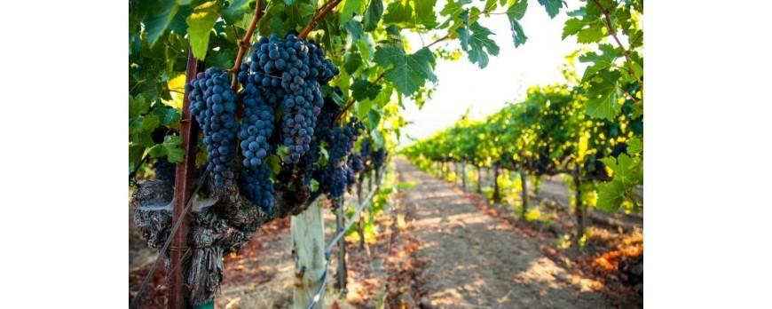 España consigue un récord histórico de exportación de vinos