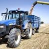 Continúa el ascenso de precios en todos los cereales a excepción del maíz