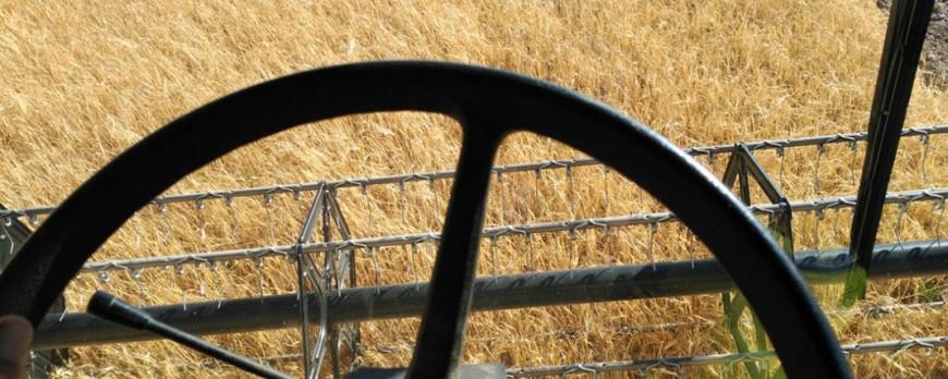 Vuelven a caer los precios de cereales en los mercados mayoristas