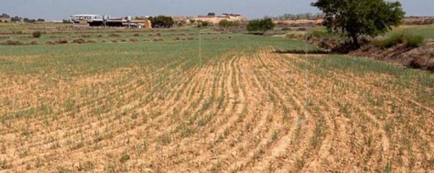 CyL da acceso para solicitar ayudas contra la sequía sin seguro agrario
