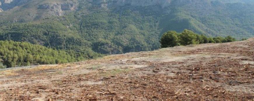 Desde Alicante piden una medida de contención de tala contra la Xylella, igual que en Baleares