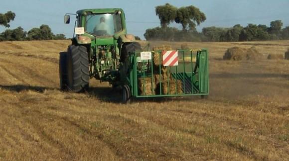 Caída generalizada en los precios de los cereales en los mercados mayoristas, a excepción de la cebada
