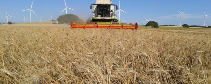 Según el Ministerio de Agricultura, el sector del cereal tiene que avanzar mucho todavía