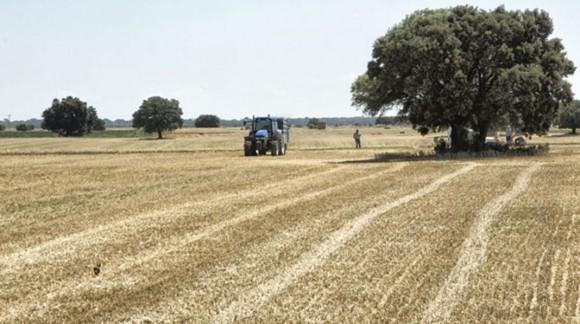 La producción de cereales baja un 40% en Castilla la Mancha
