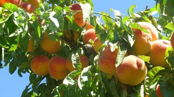 España es actualmente el principal exportador de frutas y hortalizas de la UE