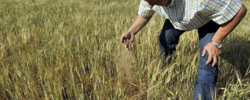 Asaja defiende en Bruselas de que se apueste por variedades de cereales para la sequía