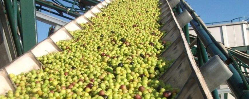 Los precios del aceite de oliva siguen aumentando su cotizacion
