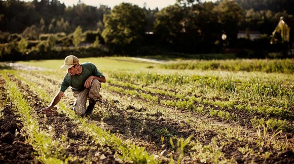 El sector agrícola catalán le pide a Tejerina que medie ante Hacienda para desbloquear varias partidas